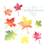 Watercolor autumn leaves. Stock Photos