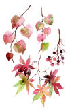 Watercolor autumn leaves, branches and berry. Royalty Free Stock Photos