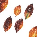Orange autumn leaves. Watercolor illustrations set royalty free illustration