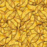 Watercolor autumn leaves pattern. Seamless pattern with autumn yellow leaves of elm. Hand painted watercolor illustration. Design for fabric, textile, wrapping Royalty Free Stock Image