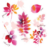 Watercolor autumn leaves Royalty Free Stock Image