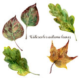 Watercolor autumn leaves set. Hand painted fall leaves isolated on white background. Botanical illustration for design stock illustration