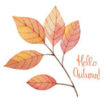 Watercolor autumn leaves Royalty Free Stock Photography