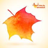 Watercolor autumn maple leaf Stock Photo