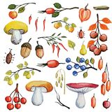 Watercolor autumn mushrooms,berries,branches set Royalty Free Stock Photography