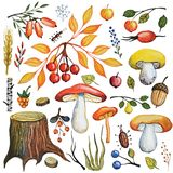 Watercolor autumn mushrooms,berries,branches,wood set Royalty Free Stock Images