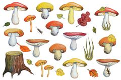 Watercolor autumn mushrooms,leaves set Royalty Free Stock Photos