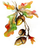 Watercolor autumn nature hand drawn  acorn Royalty Free Stock Photography