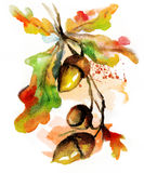 Watercolor autumn nature hand drawn  acorn Royalty Free Stock Image
