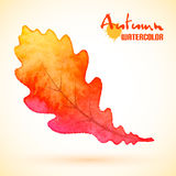 Watercolor autumn oak leaf Royalty Free Stock Images