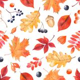 Watercolor autumn pattern with colorful leaves and berries. Botanical illustration with leaves of oak, maple, mountain ash, grapes, dog rose, acorn, physalis Vector Illustration