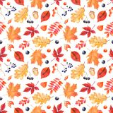 Watercolor autumn pattern with colorful leaves and berries. Botanical illustration with leaves of oak, maple, mountain ash, grapes, dog rose, acorn, physalis Royalty Free Illustration