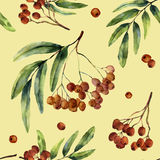 Watercolor autumn pattern with rowan. Hand painted mountain-ashe fruit with leaves and branch isolated on yellow Stock Image