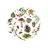 Watercolor autumn print. Hand painted mushroom, rowan, fall leaves, tree branch, pine cone, berry and acorn isolated on. White background. Nature illustration Royalty Free Stock Image