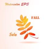 Watercolor Autumn Rowan Leaves. Royalty Free Stock Photo
