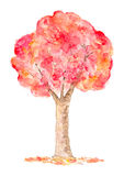 Watercolor Autumn Tree, Hand Drawn and Painted Stock Images