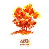 Watercolor autumn tree Stock Image