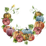 Watercolor autumn wreath with pumpkin. Hand painted bright pumpkins with leaves and flowers isolated on white background Stock Photography