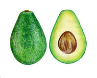 Watercolor Avocado, half of avocado, avocado seed Royalty Free Stock Photography