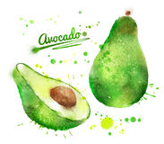 Watercolor avocado Royalty Free Stock Photo