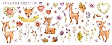 Watercolor baby deer and wildflower set vector illustration
