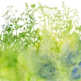 Watercolor background with drawing herbs and flowers. Watercolor background with silhouettes of wild plants, herbs and flowers, botanical illustration, natural Stock Photos
