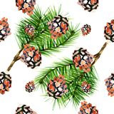 Watercolor background fir cones. Seamless pattern on white background. Watercolor background fir cones. Seamless pattern on white Royalty Free Stock Photography