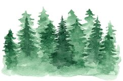 Watercolor background with green coniferous forest. Beautiful watercolor background with green coniferous forest. Mysterious fir or pine trees illustration for royalty free illustration