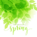 Watercolor background with green leaves. Vector. Illustration EPS10 Stock Photography