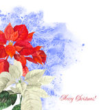 Watercolor background  with poinsettia flowers2-01 Stock Photography