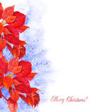 Watercolor background  with poinsettia flowers-01 Stock Image