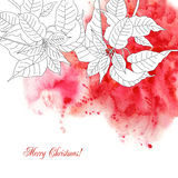 Watercolor background  with poinsettia Stock Image