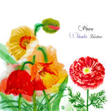 Watercolor background with red poppy-01 Royalty Free Stock Image