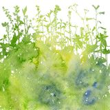Watercolor background with drawing herbs and flowers. Watercolor background with silhouettes of wild plants, herbs and flowers, botanical illustration, natural Royalty Free Stock Photos