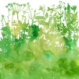Watercolor background with drawing herbs and flowers. Watercolor background with silhouettes of wild plants, herbs and flowers, botanical illustration, natural Stock Photo