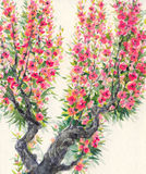Watercolor background. Spring blooming of an old tree Stock Images