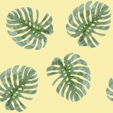 Watercolor background tropical plants monstera leaves. Seamless exotic pattern with tropical leaves Stock Images