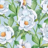 Watercolor background with white flower Royalty Free Stock Image