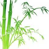Watercolor Bamboo branches isolated on the white Stock Image
