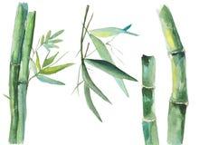 Watercolor bamboo illustration Royalty Free Stock Photo