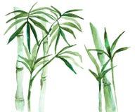Watercolor bamboo illustration Royalty Free Stock Photos
