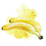 Watercolor banana illustration. Hand painted watercolor artistic banana illustration with decorative stain on white background Royalty Free Stock Photo