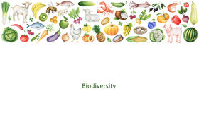 Watercolor banner of the biodiversity. Watercolor banner of the biodiversity of healthy eating. Collection of fruits, vegetables, animals, fish and birds. Space Stock Images