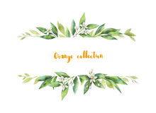 Watercolor banner fruit orange branch isolated on white background. Illustration for design wedding invitations, greeting cards, postcards. Spring or summer royalty free illustration