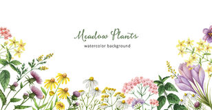 Watercolor banner with medical plants. Stock Image