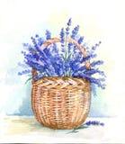 Watercolor basket with lavender. Illustration hand drawn watercolor basket with lavender Stock Photos