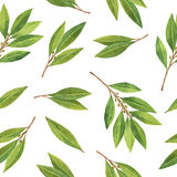Watercolor Bay leaf seamless pattern of flowers and leaves isolated on white background. Organic products for the design of healthy food, kitchen, market, menu Royalty Free Stock Photo