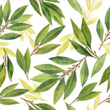 Watercolor Bay leaf seamless pattern of flowers and leaves isolated on white background. Organic products for the design of healthy food, kitchen, market, menu Royalty Free Stock Photos