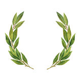 Watercolor Bay leaf wreath isolated on white background. Stock Image