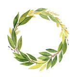 Watercolor Bay leaf wreath isolated on white background. Hand drawn organic products for design of invitations, greeting cards, quotes Royalty Free Stock Photos